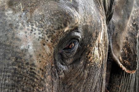 glance: sad glance of the elephant Stock Photo