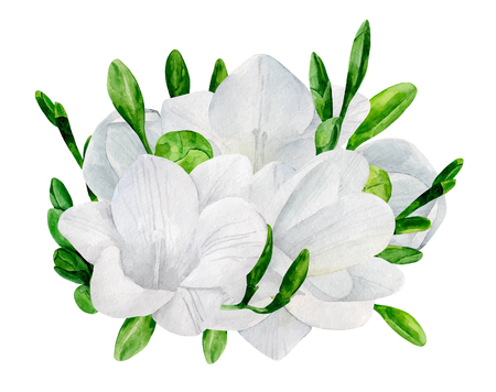 Watercolor wedding freesia bouquet vector clip art. White flowers