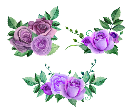 Watercolor purple roses bouquets. Flowers clip art. Floral hand painted