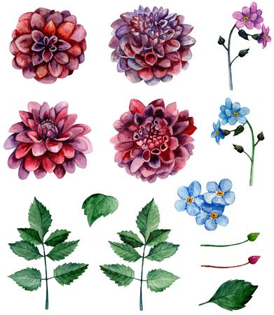 Watercolor blossom dahlias flowers clip art