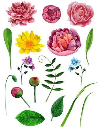 Watercolor peonies flowers clip art. Botanical clipart