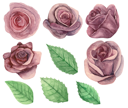 Roses clip art. Watercolor painted flowers. Floral isolated
