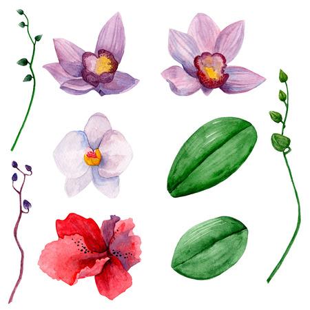 Hawaiian flowers clipart . Watercolor orchids clip art Imagens