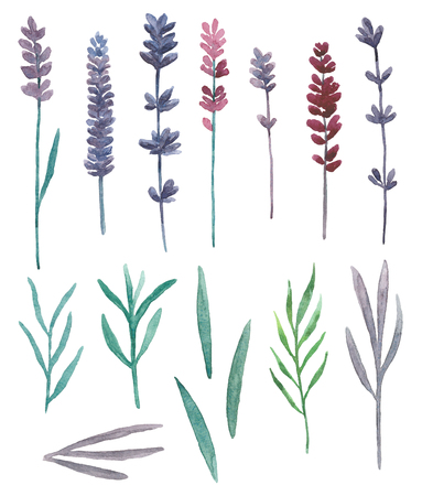 Watercolor lavender. Wild flowers and grass field clip art. Purple floral