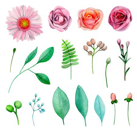 Watercolor garden flowers. Pink roses. Floral clip art