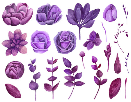 Watercolor purple flowers set clipart. Floral violet collection clip art Imagens