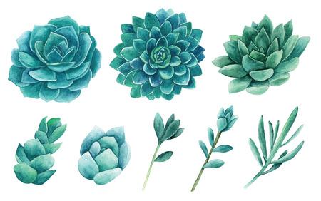 Watercolor succulents clip art. Cactus clipart set Imagens