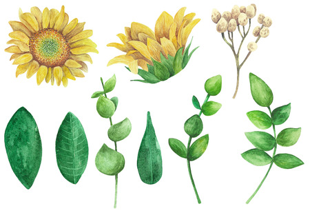 Sunflowers clipart. Rustic flowers set. Watercolor country floral collection