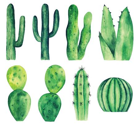 Watercolor cactus clip art. Green botanical clipart bundle