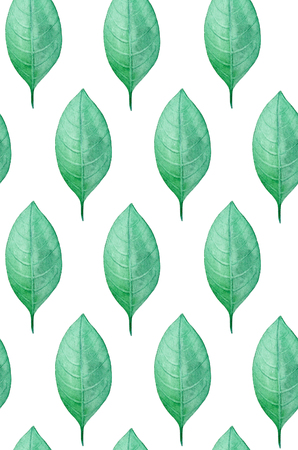 Watercolor leaves pattern. Green botanical background