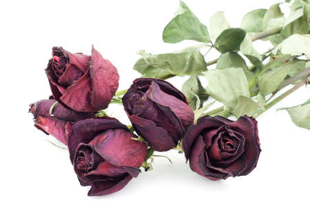 Isolated photo of five dead roses Stock Photo