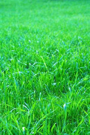 Photo of grass-plot