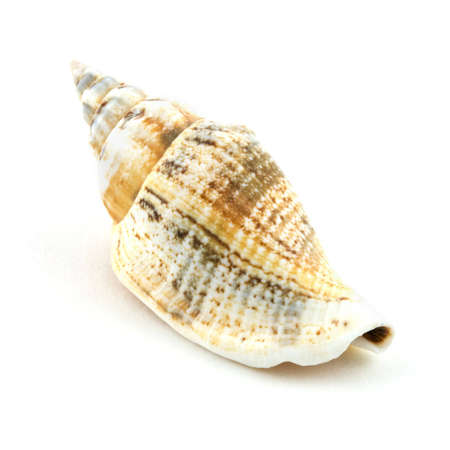Isolated photo of an small designed shell