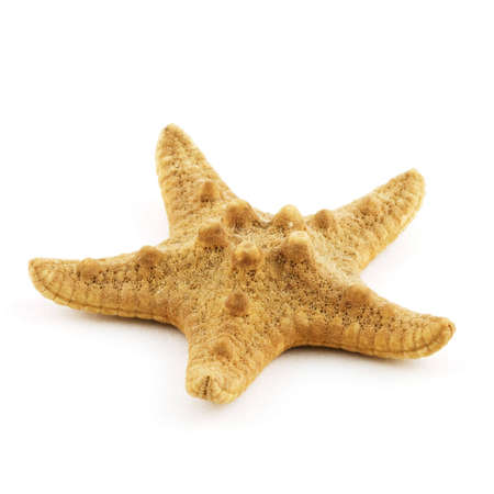 Isolated photo of an yellow sea star Stock Photo