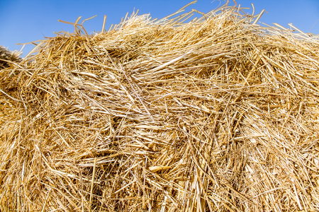 Dry straw as a background abstract Stock Photo