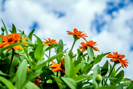 Flowers in the flowerbed against the sky Stock Photo