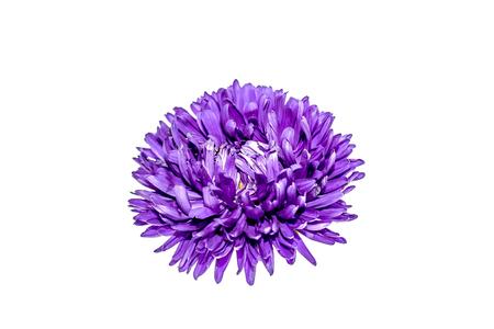 Flower on white background close-up Stock Photo