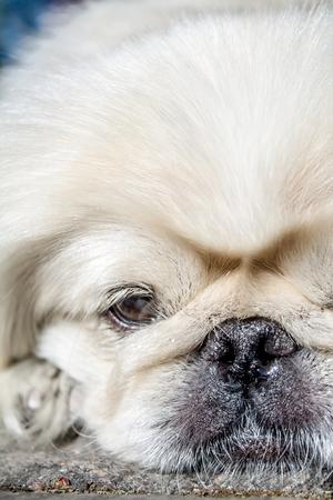 Japanese Hin Dog