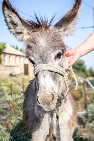 Young donkey on the street