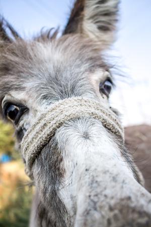 Head of a donkey close-up