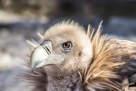 A large bird of prey