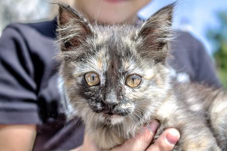 Homeless kitten in hands Stock Photo
