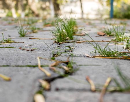 Groen gras door de straatsteen