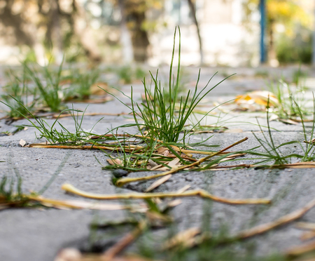 Green grass through the paving slab Stock Photo