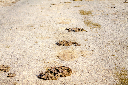 Excrement of animals on the road