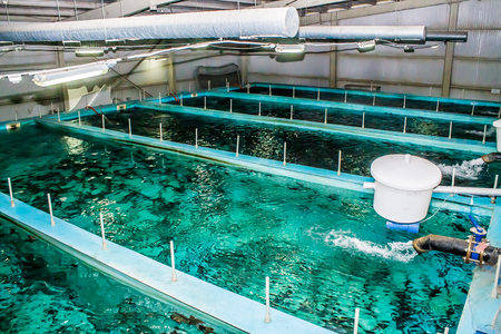 Swimming pool for fish breeding