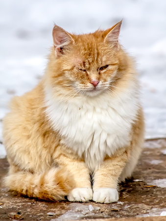 Cats in winter on the street