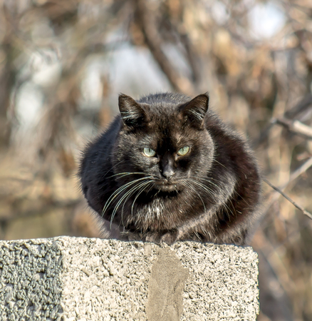 Black cat on the spring fence