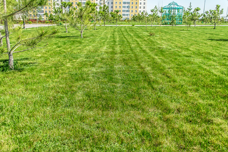 Freshly trimmed lawn in the park Zdjęcie Seryjne
