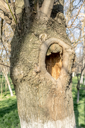 Tree with a hole in the park