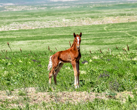 Foal horse on the road Stok Fotoğraf