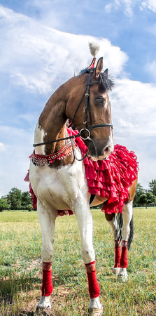 A horse in national Kazakh costumes