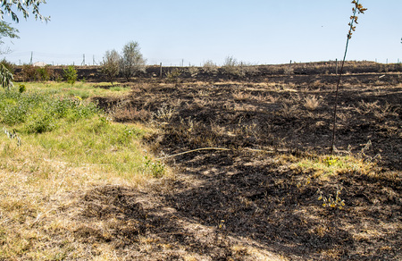 Burnt dry grass in the steppe Stock Photo