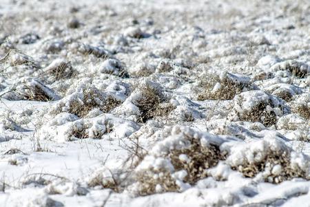 Snow on the dry grass Standard-Bild