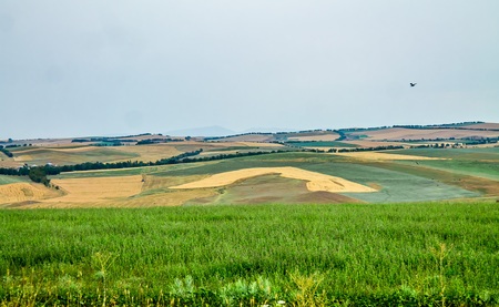 Agricultural fields in the foothills of the landscape