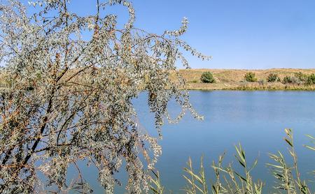 Jude tree above the lake landscape
