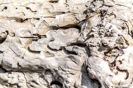 Old tree eaten by bark beetles as background
