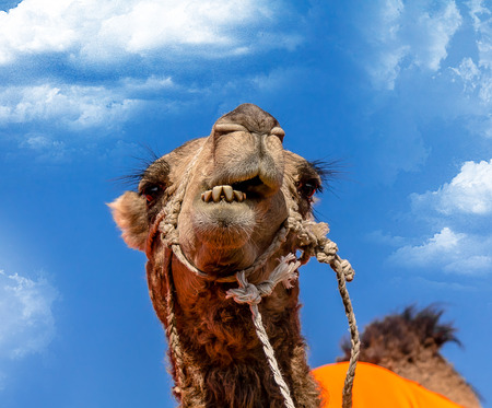 Head of a camel close up against the sky