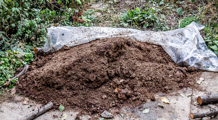 A pile of rotted manure in the garden Banque d'images
