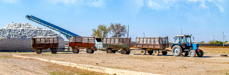 Caravan of tractor carts with a crop of raw cotton in a cotton plant Stock Photo