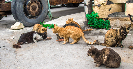 Homeless cats on the street Imagens