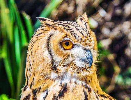 Bird of Prey Owl 写真素材