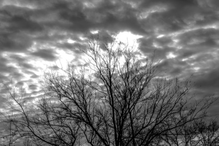 Silhouette of tree branches on sky background depressive landscape