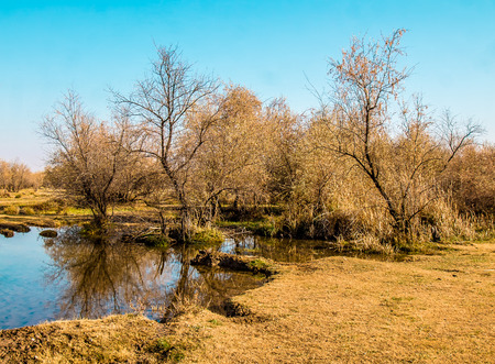 Dry bare trees reflected in a puddle in the fall landscape