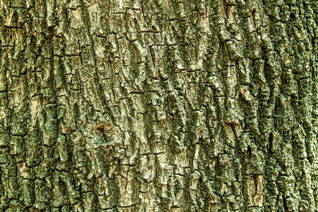 Tree bark as an abstract background for design