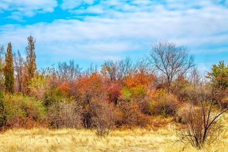 Wilde Herbstlandschaft Standard-Bild